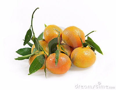 clementine tree.png